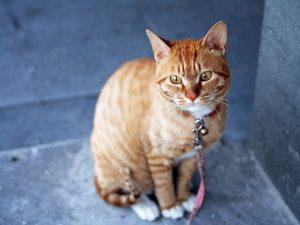 pets_cat